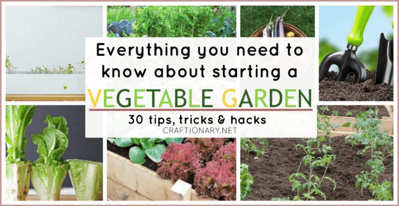 Vegetable gardening for starters