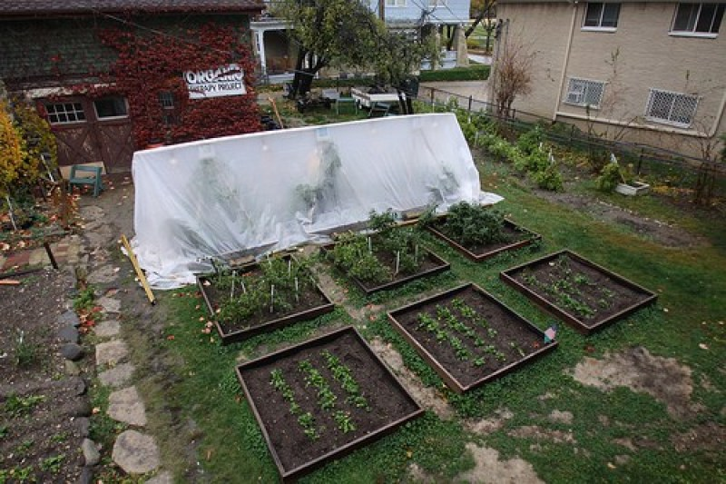 head start to tomatoes in winter