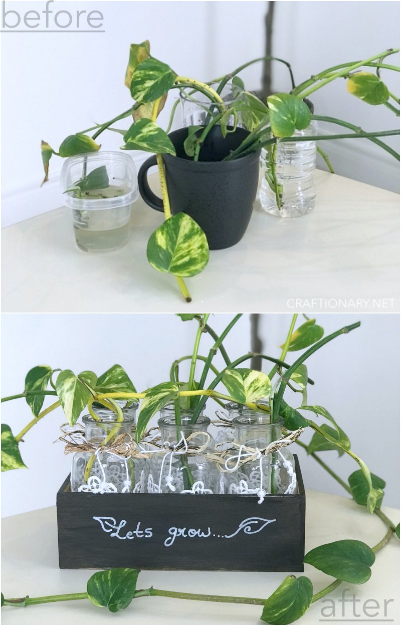before-after-plant-propagation-station