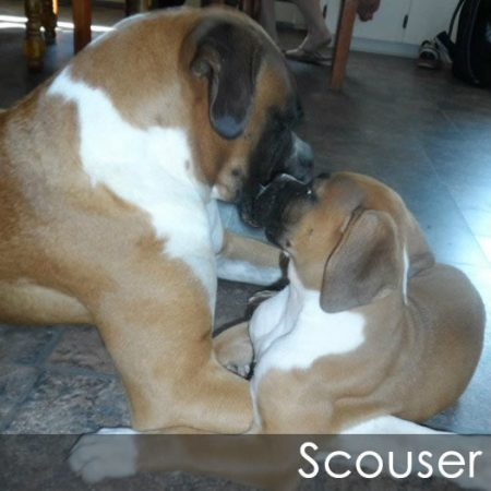 Max and Scouser