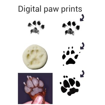 Your pet's actual digital paw print