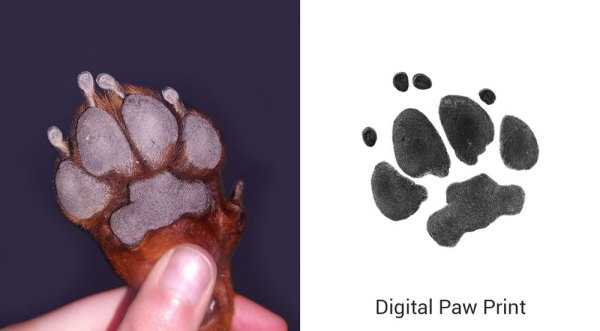 paw print from a photo of a paw