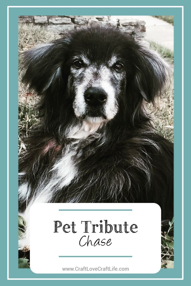 tribute to a dog