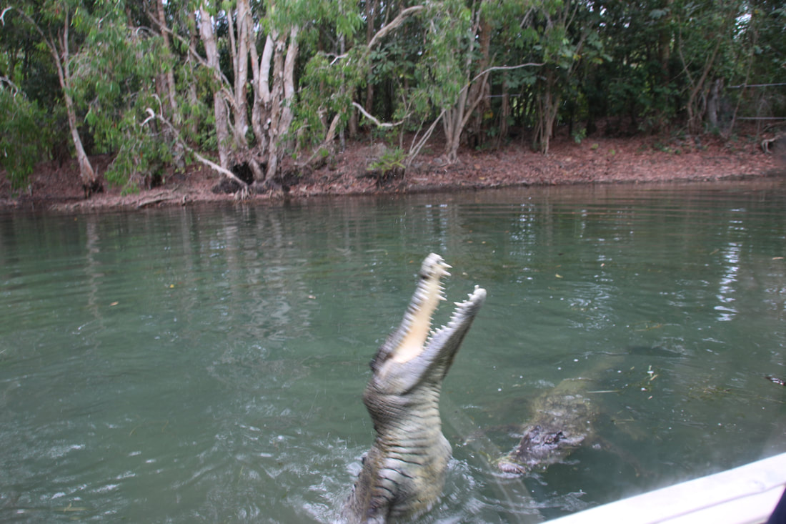 Photos from Hartleys Crocodile Adventures