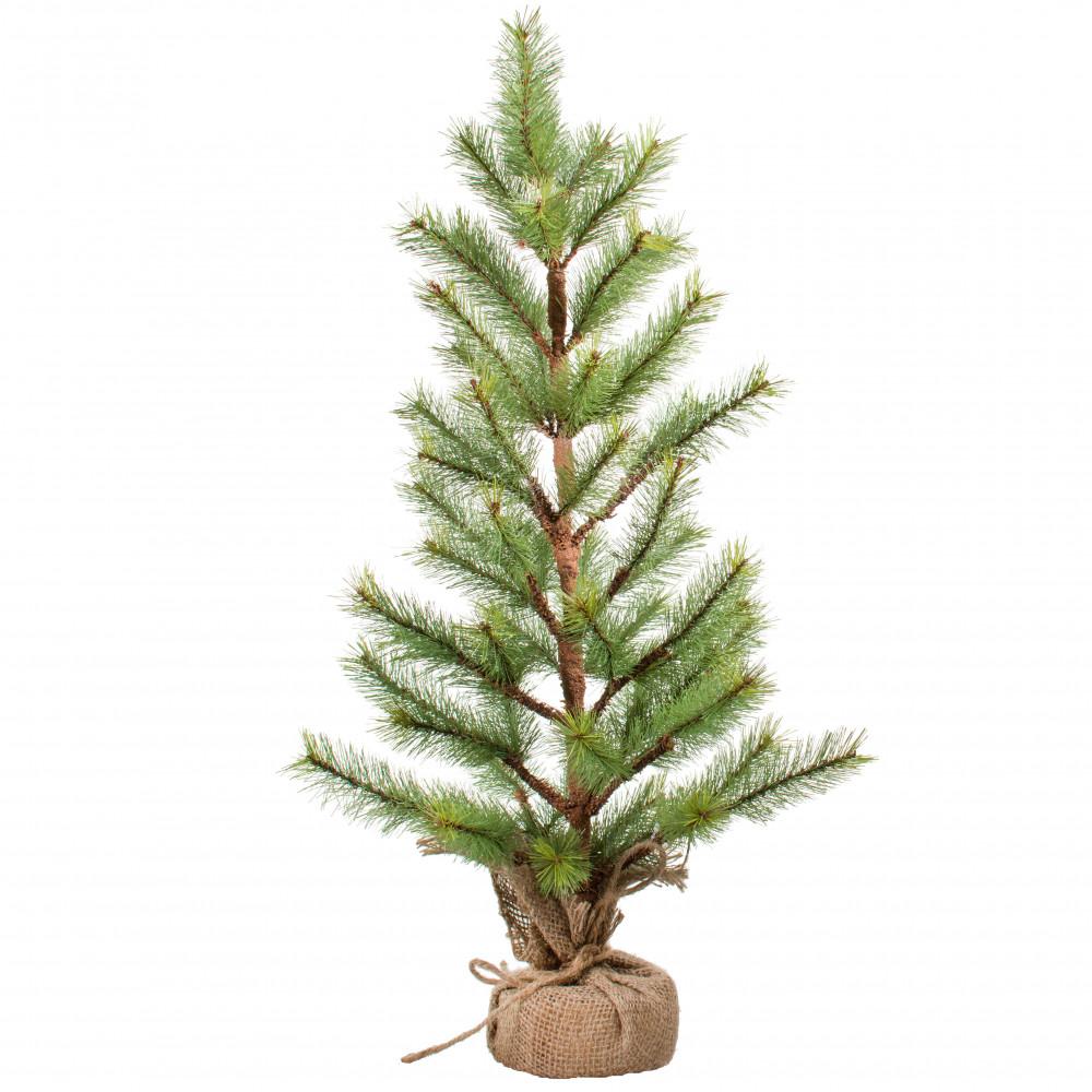 24 alaska fir small