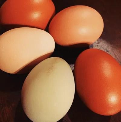 Hawthorn Meadow Farmstead - eggs - Craftsbury Farmers Market