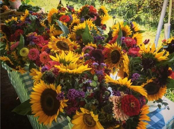 Life Arises Farm flowers - Wolcott, VT