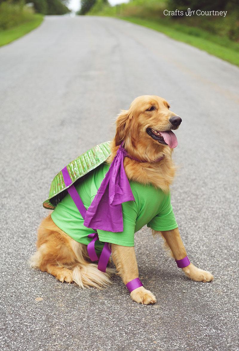 Fun Teenage Mutant Ninja Turtle Dog Costume