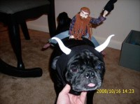 Handmade Halloween Costumes: Bullrider and Bull Costume ...
