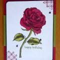 Beautiful red rose birthday card