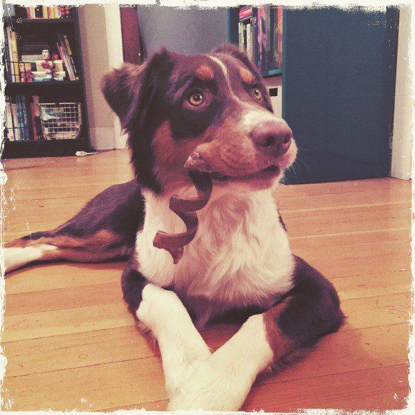doggie-treat