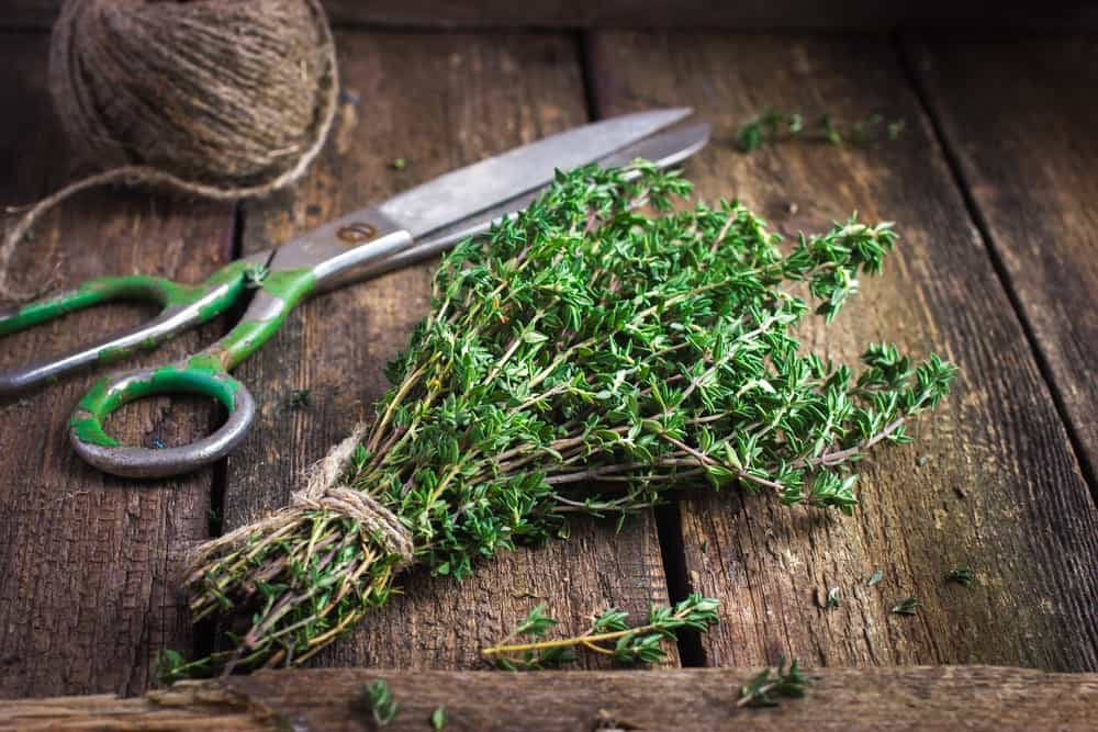 10 Best Herbs to Grow Year Round