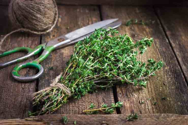 10 Best Herbs to Grow All Year Round