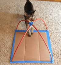 DIY Cat Tent Made with T-Shirts and Cardboard - Crafty Morning