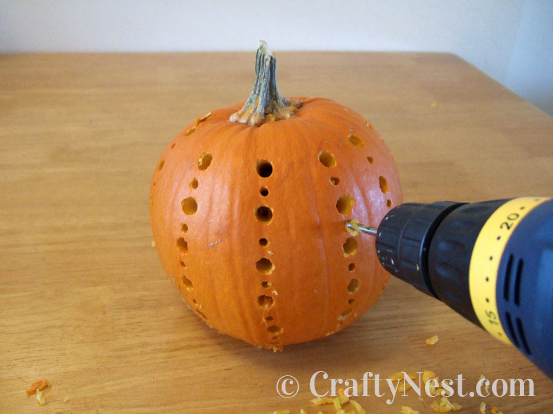 Drilling a vertical pattern in the large pumpkin, photo