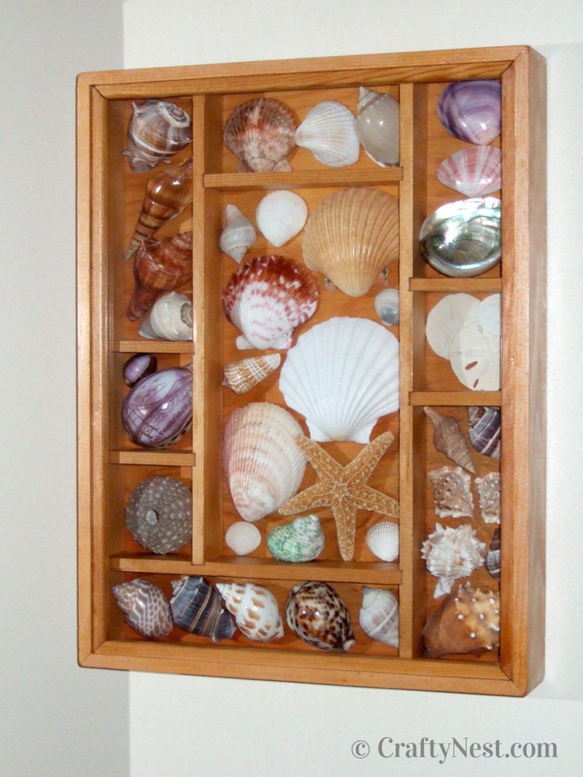 Vertical shadowbox with seashells, photo