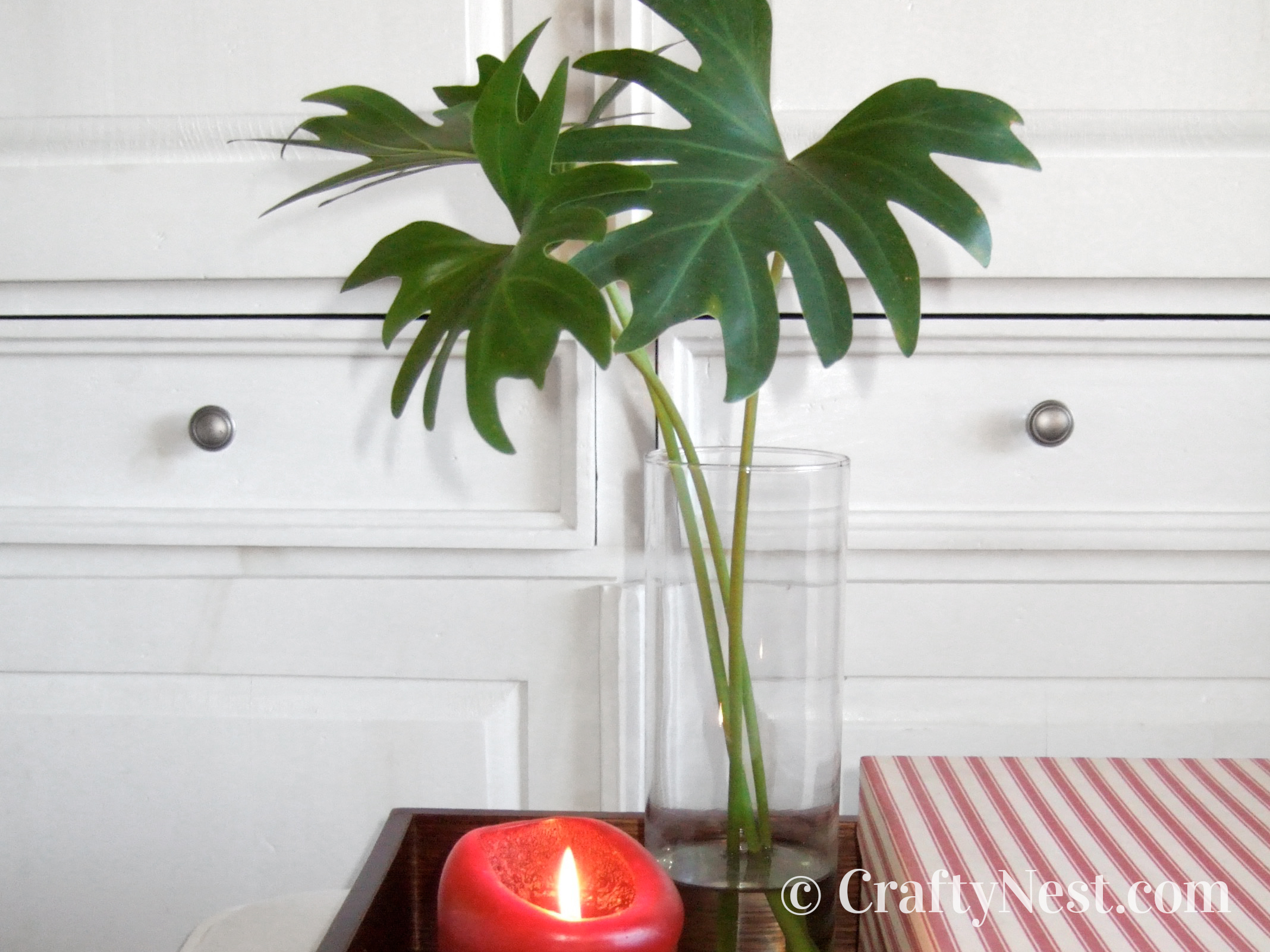 Philadendron leaves in a vase, photo