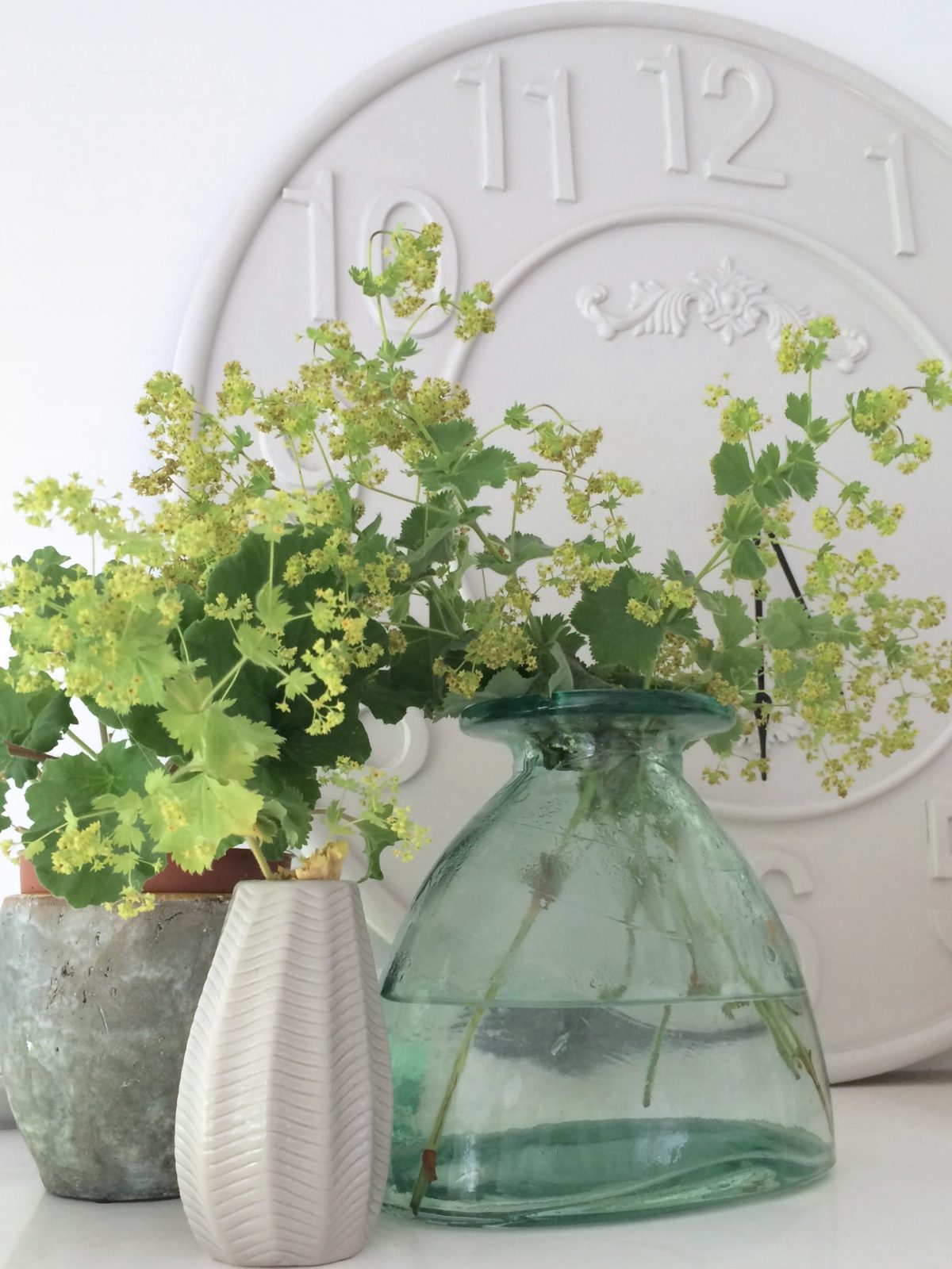 Lady's mantle in a vase, photo