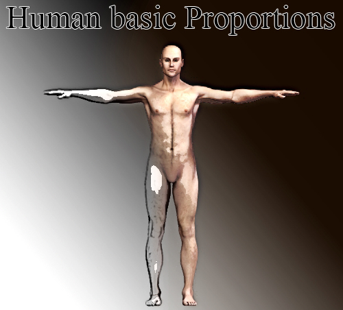 Human body proportions basics: The Canon