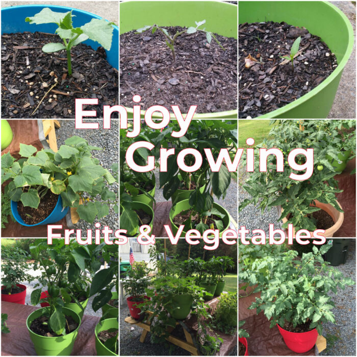 Enjoy growing fruits and vegetables. Easy and painless gardening for beginners.