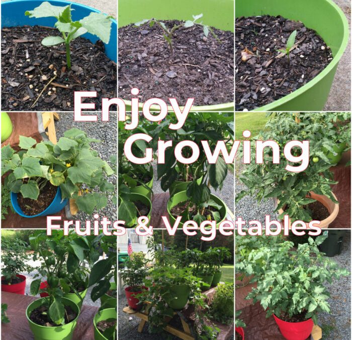 Enjoy growing fruits & vegetables. Savvy gardening for beginners.