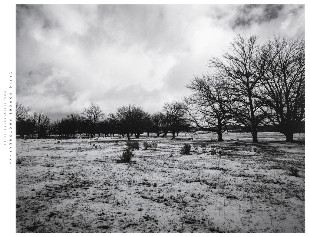 film photography - large format in the snow