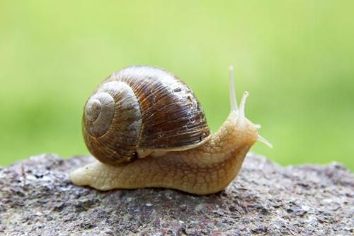 Snailssssd