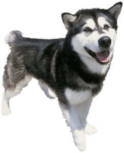 Required Vaccinations for Boarding Animals in PA