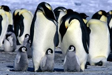 Filme - A Marcha dos Pinguins