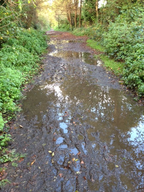 Muddy Downslink in Cranleigh