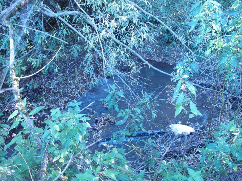 Cranleigh Waters dry up October 2015