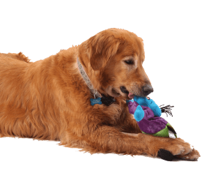 Dog with goDog zombie toy