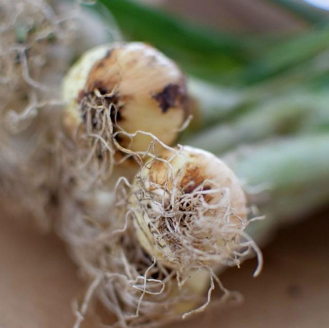 Warm Summer Onion & Rice Salad-002