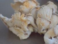 Oyster Mushroom Orecchiette-032