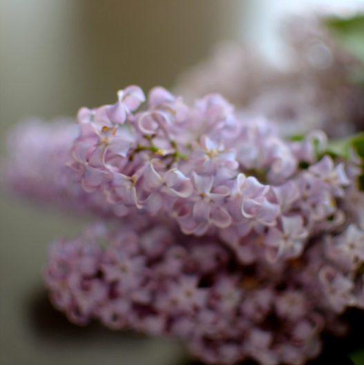 Sugared Lilac Cake-001