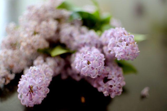 Sugared Lilac Cake