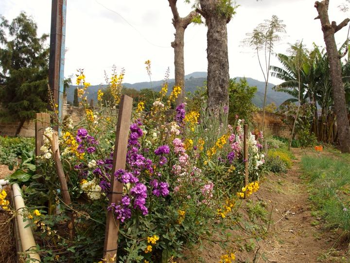 Caoba Farm