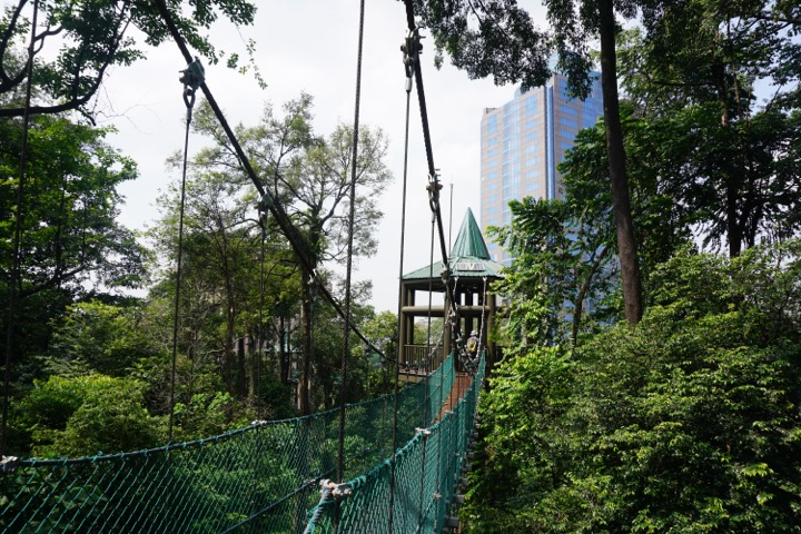 Rain Forest Malaysia