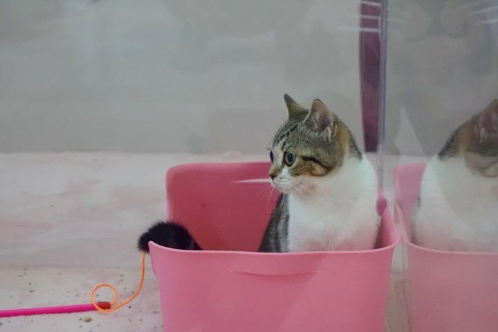 Cute Cat Carnival