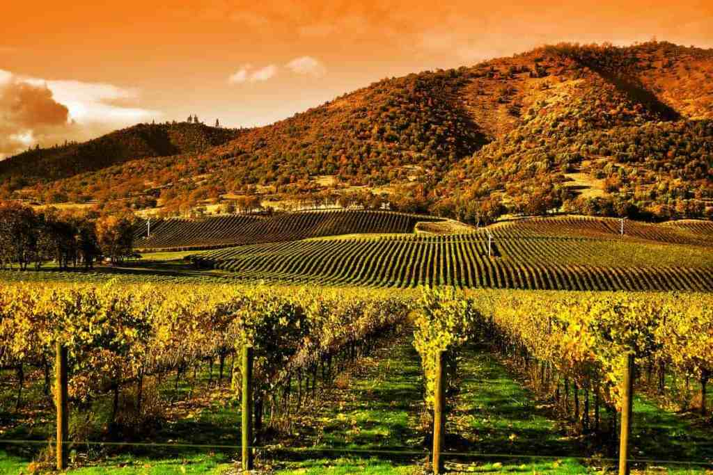 Napa and Sonoma Private Tour