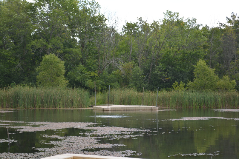 BooBoo's Pond
