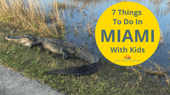 7 Things To Do In Miami With Kids