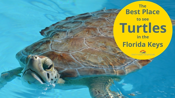 The Best Place To See Turtles In The Florida Keys