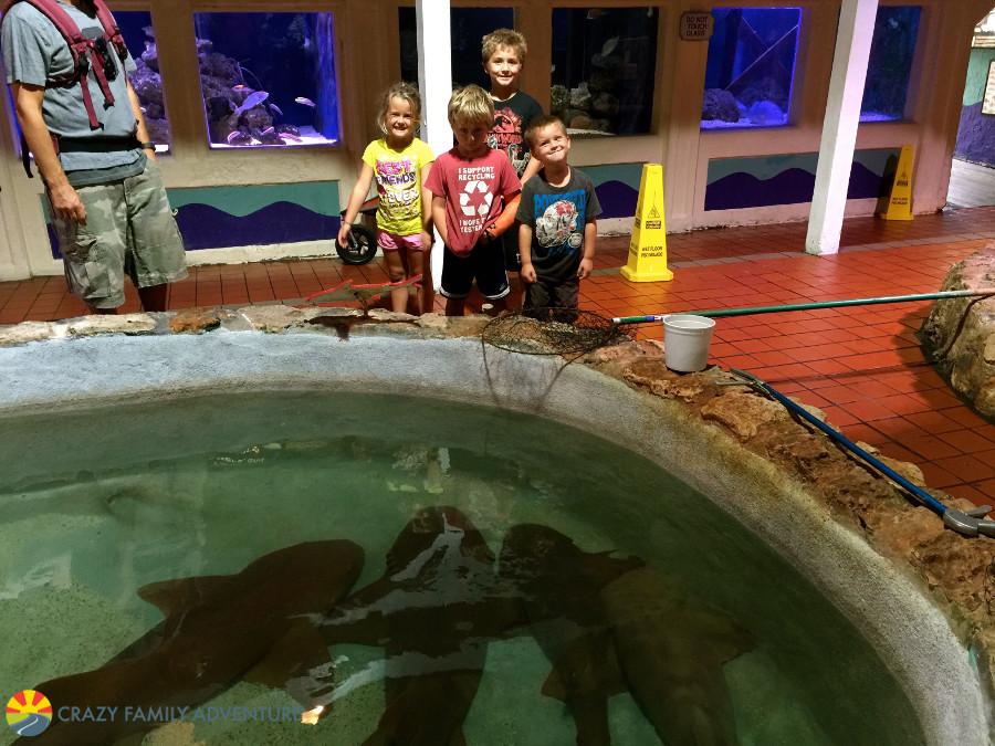 aquarium-sharks