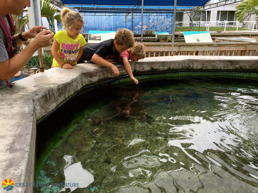 aquarium-sting-rays