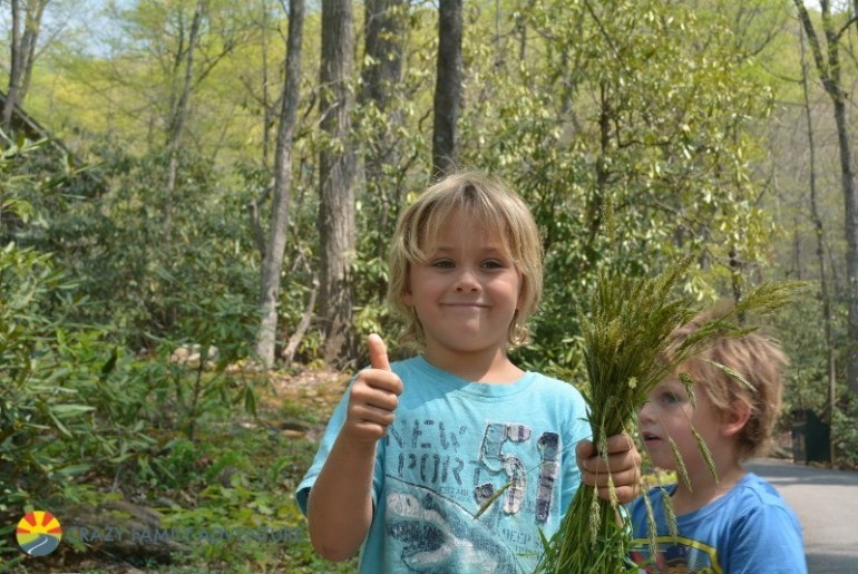 Learning how to forage for food is a unique thing to do in Asheville with kids