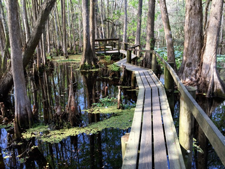 Highlands Hammock State Park is a great place to visit on The Ultimate Florida Road Trip