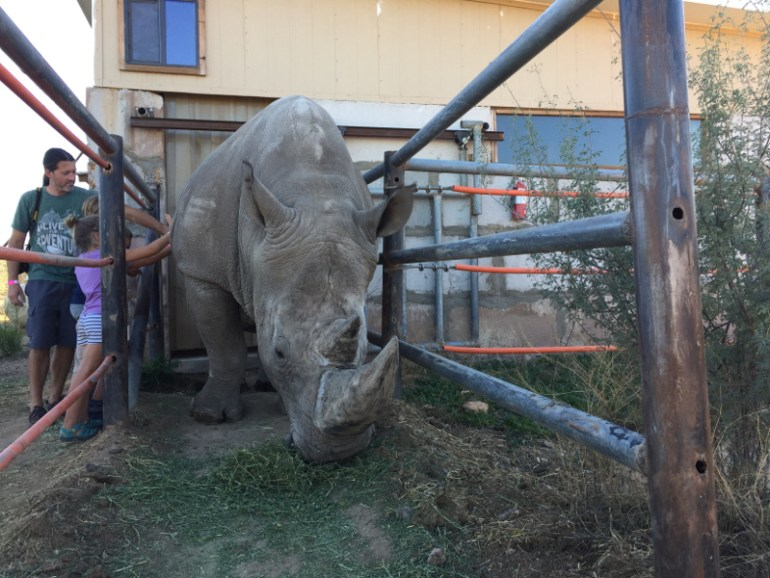 Petting a rhino at Out Of Africa