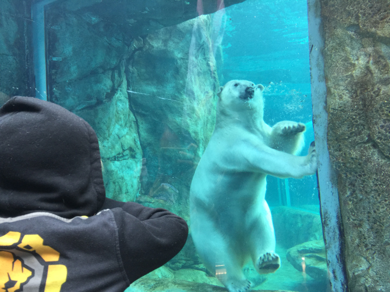 Assiniboine Park Zoo was one of our favorite things to do in Winnipeg!