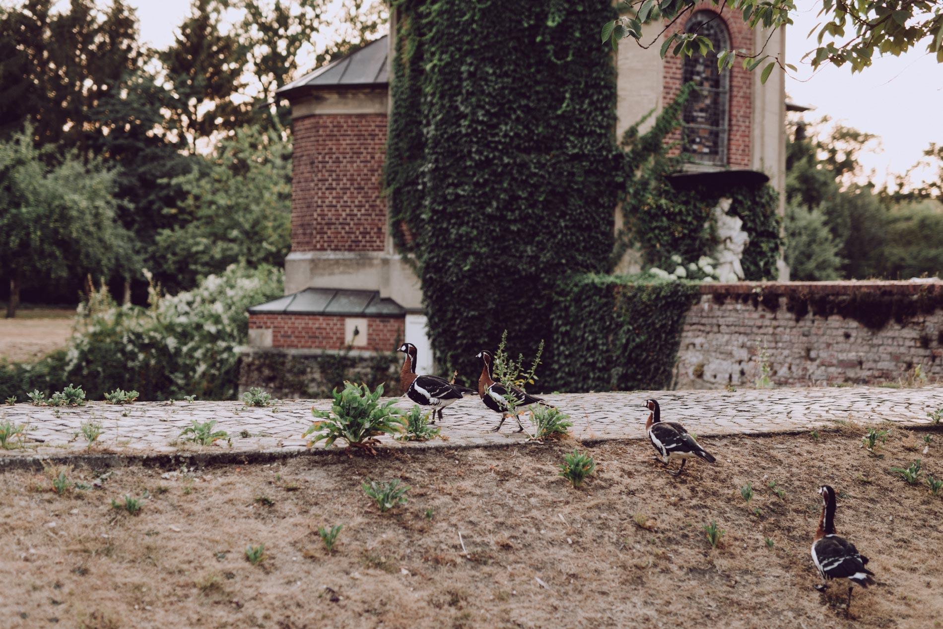 Heiraten in der Clemenskirche Mnster Feiern im Schloss